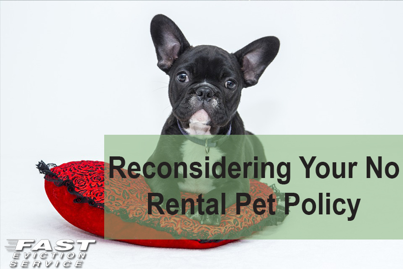 Reconsidering Your No Rental Pet Policy Fast Evict