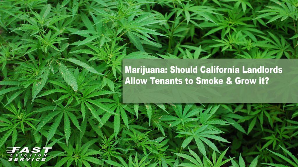Marijuana: Should California Landlords Allow Tenants to Smoke & Grow?